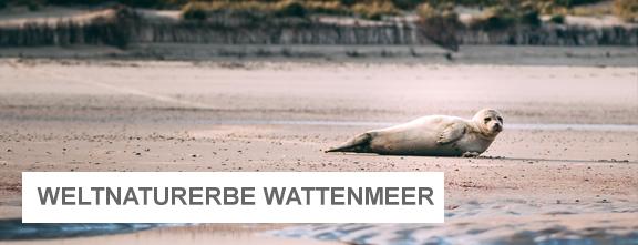 Seehund liegt am Strand | © Janis Meyer