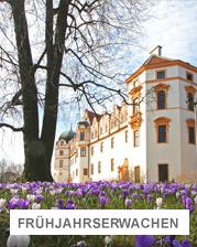 Schloss Celle mit Krokussen davor   © Celle Tourismus und Marketing GmbH / K.Behre