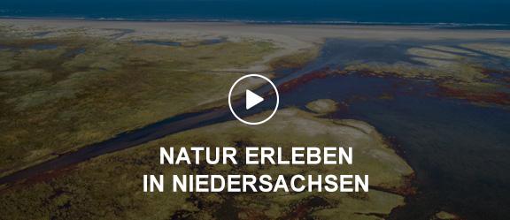 Luftaufnahme der Ostplatte Spiekeroogs mit Salzwiesen und Strand   © Willi Rolfes